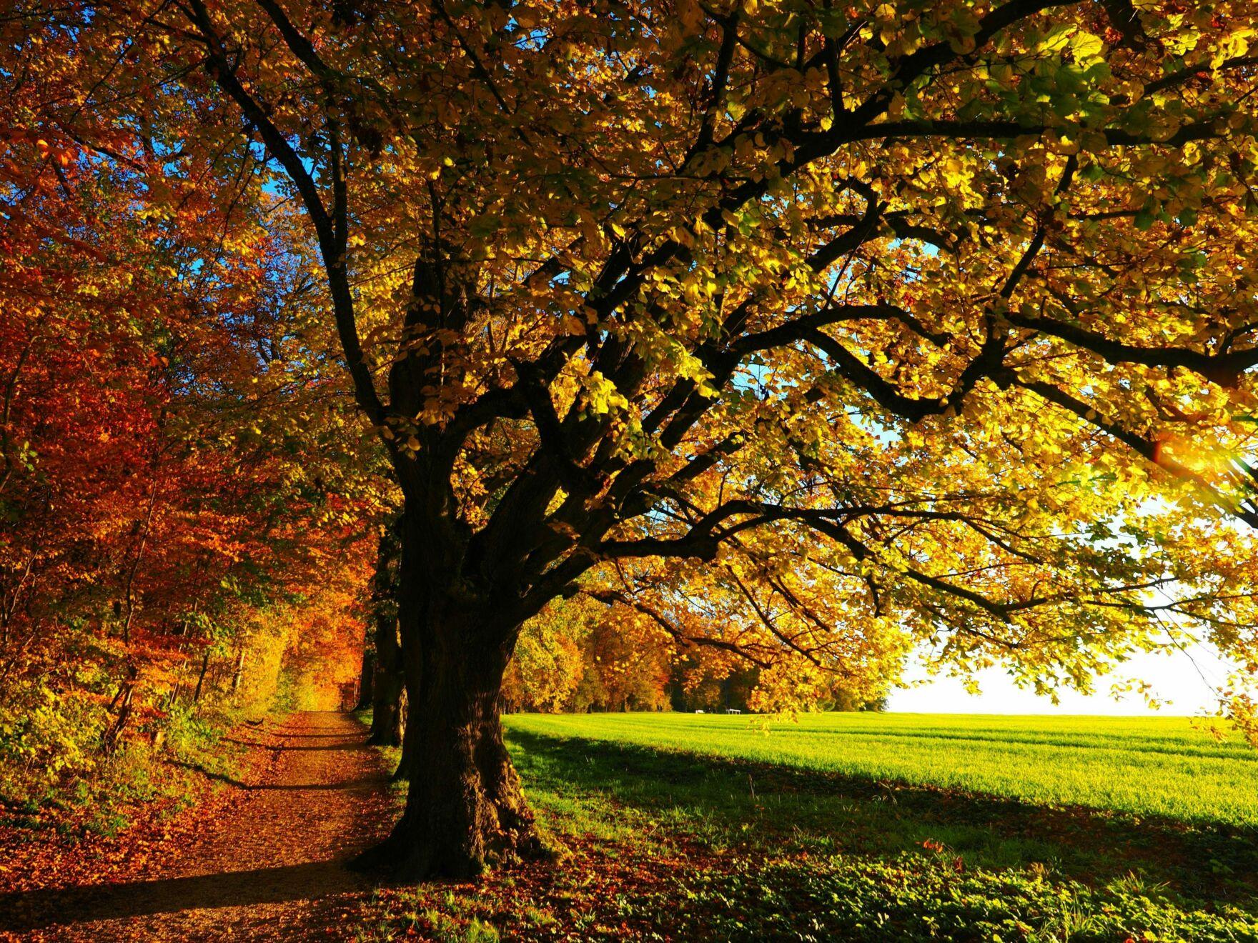 Pexels autumn autumn mood colorful edge of the woods 35778